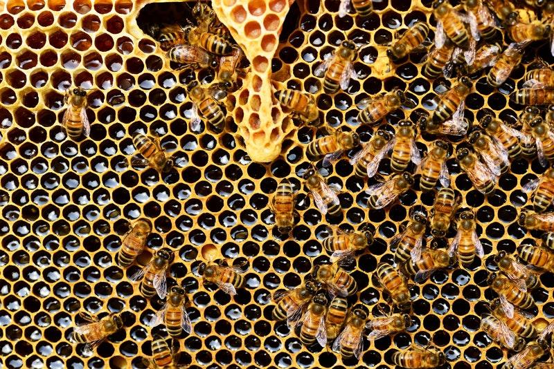 abeilles-ruches