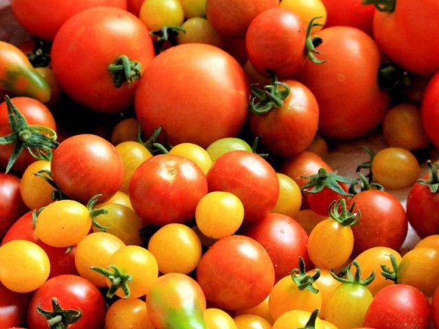 Dossier spécial tomate : elle vient de loin !